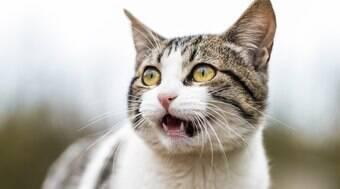 Família leva gato para cremação e dão de cara com ele em casa