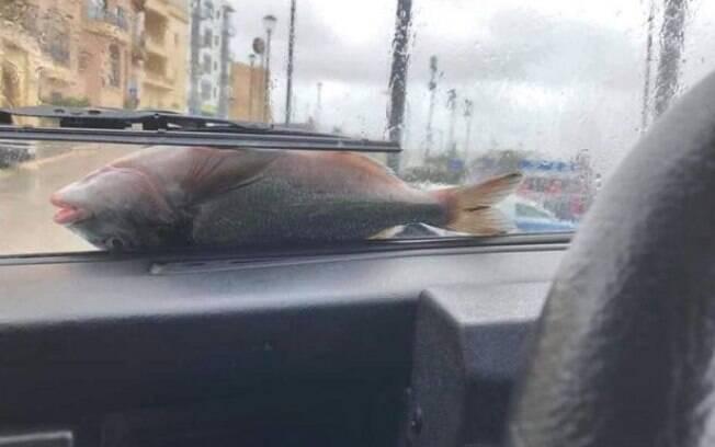 Moradores da ilha de Malta foram surpreendidos por 'chuva' de peixes durante vendaval