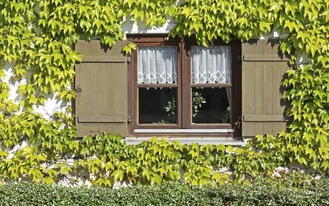 Fachadas verde são alternativas arquitetônicas interessantes que permitem bonitos resultados paisagísticos