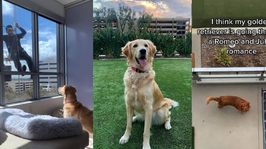 Aubrey faz amigos humanos e caninos sem sair de casa