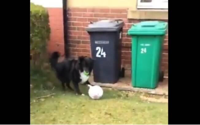Cachorro brincalhão não deixa carteiro fazer entregas