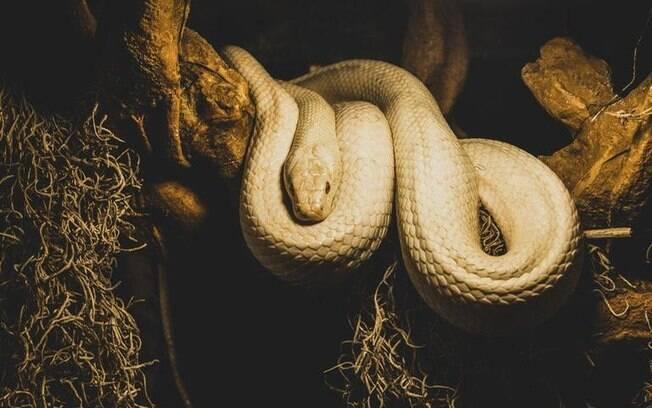Entenda a dualidade da simbologia da cobra