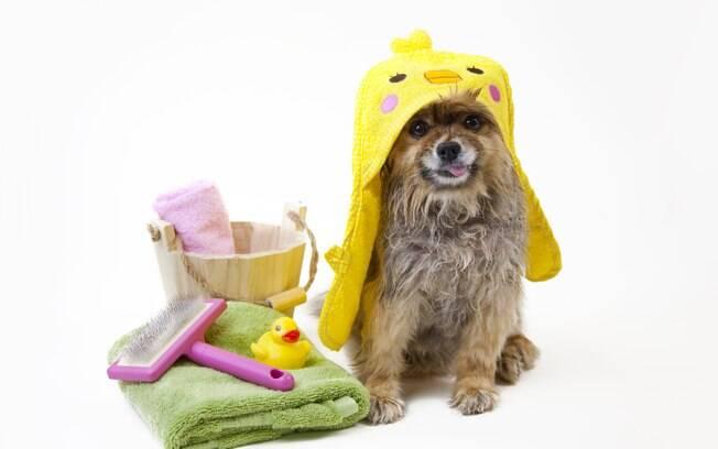 O que fazer para diminuir a queda de pelos em cães?