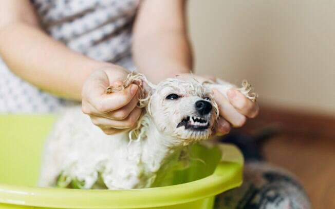 Muitos cachorro não gostam de tomar banho e acabam se tornando agressivos
