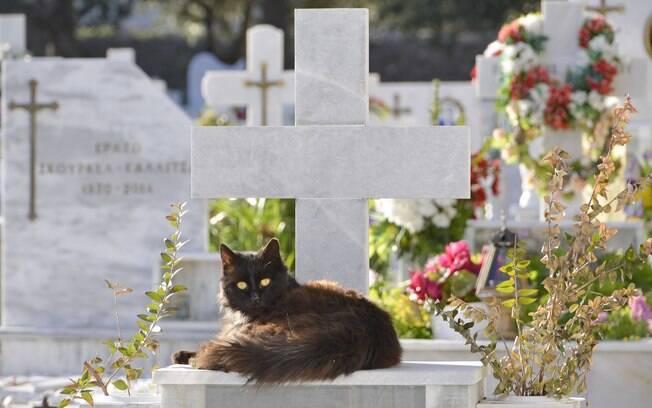 É necessário escolher bem o cemitério para o seu pet.