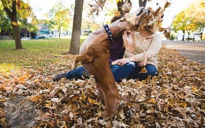 Esse cachorro é praticamente uma diva.