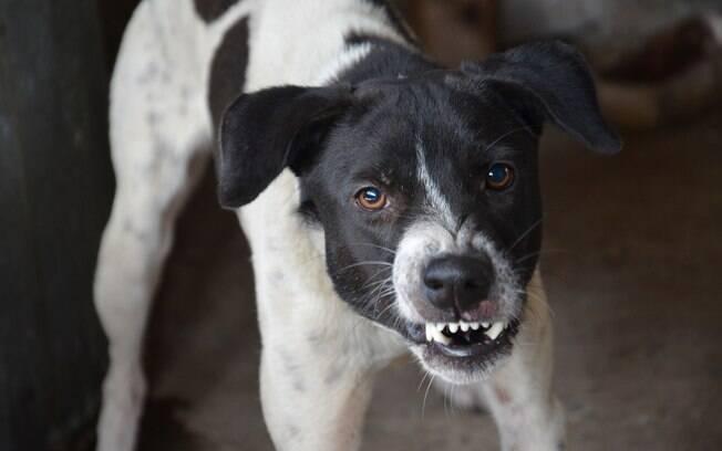 A agressividade nos cães pode ser provocada por diversos motivos. É importante entendê-los para tratar a situação da forma mais adequada