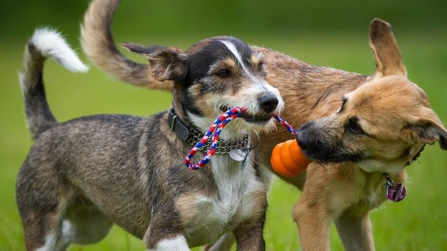 As atividades das creches para cachorros auxiliam no desenvolvimento do animal