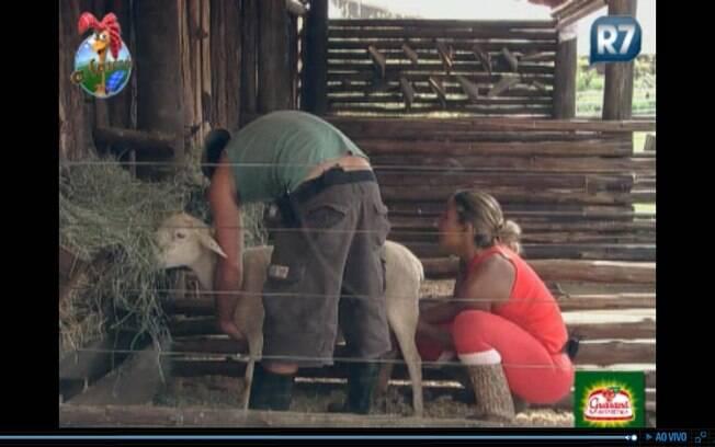 Marlon ajuda Valesca com a ovelha Careca