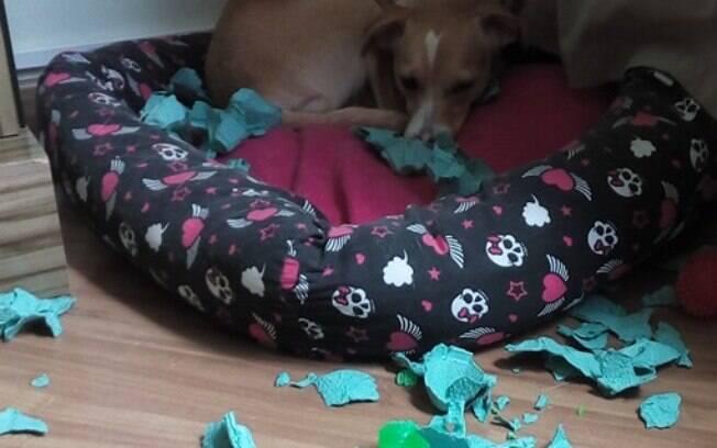 Aqui em casa a caixa de ovos vive atacando a Nina, ainda bem que ela sabe se defender.