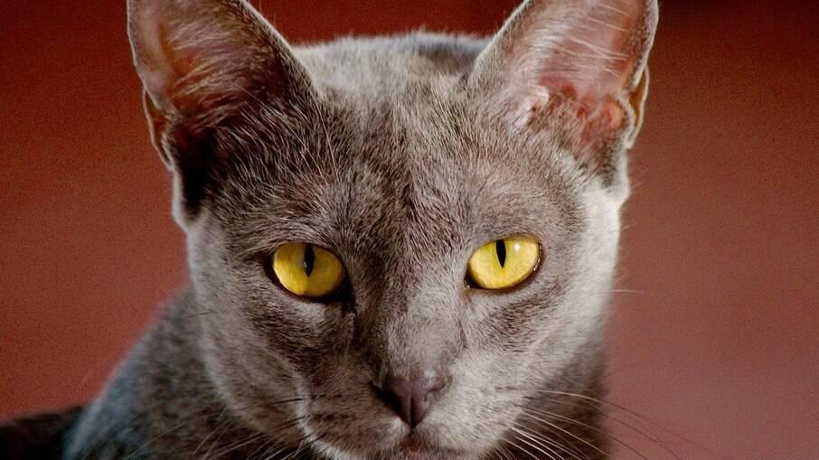 Olhos do gato e suas curiosidades