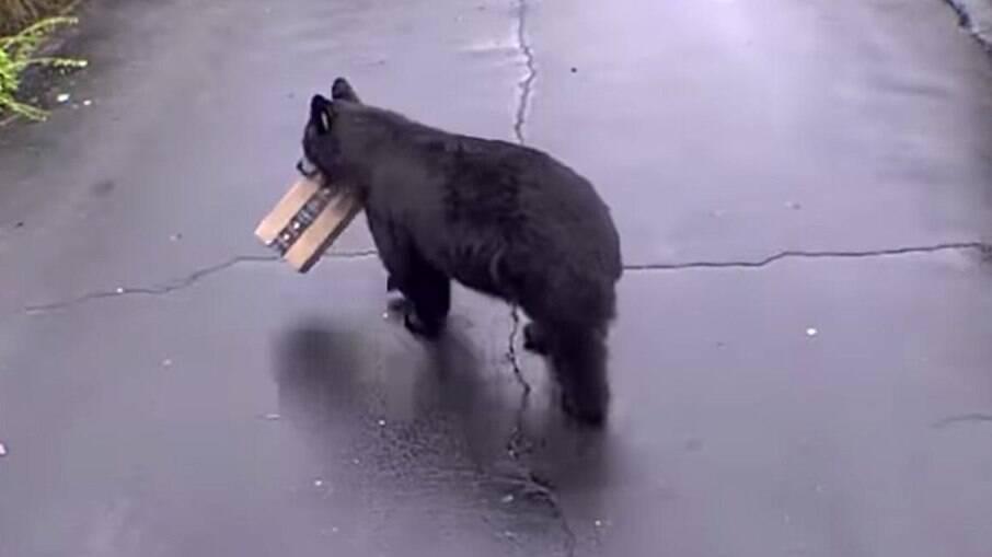 Urso ladrão invade casa e 'rouba' encomenda da Amazon em Connecticut