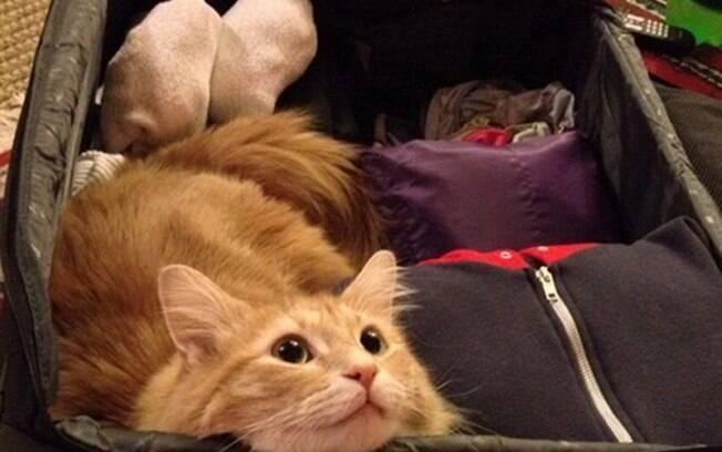 um gato que também quer viajar mesmo que tenha que ir dentro da mala.