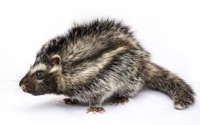 Pesquisadores descobriram que animal retira toxina de uma árvore; entenda