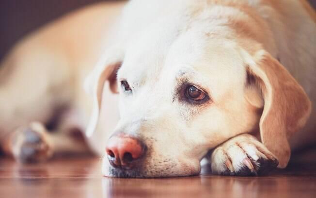 Confira alguns sinais que vão te ajudar a identificar se o seu pet está com febre