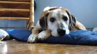Veja o que fazer para deixar sua casa pronta para receber um cão