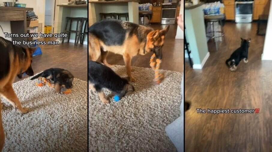 Dexter parece gostar mais do que está divertindo o menorzinho