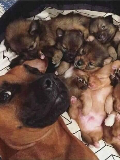 Confira as imagens de filhotes com seus pais que vai te encantar