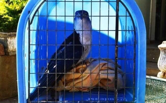 Bosque dos Jequitibás faz reabilitação de aves feridas com cerol e tiros de chumbinho