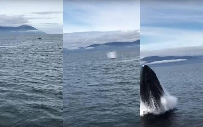 Foco dos turistas no barco era uma baleia-jubarte mais ao fundo, que dava sinais de que se preparava para um salto