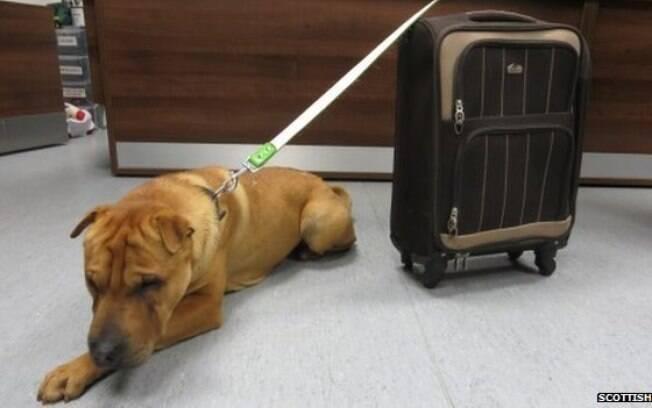Cachorro é abandonado em estação de trem com seus pertences