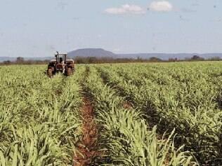 Carlos Minc adianta que plantadores vão receber incentivos e serão fiscalizados