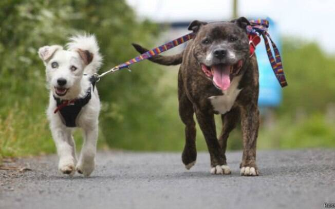 Segundo os funcionários do canil, Buzz (à direita) ajuda seu amigo cego a encontrar seu pote de comida e o empurra quando ele está indo na direção errada