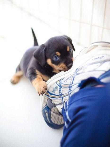 Voluntários compartilham suas fotos tiradas enquanto trabalham num abrigo de animais