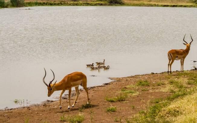Nairóbi é a capital do Quênia e tem uma fauna muito exótica