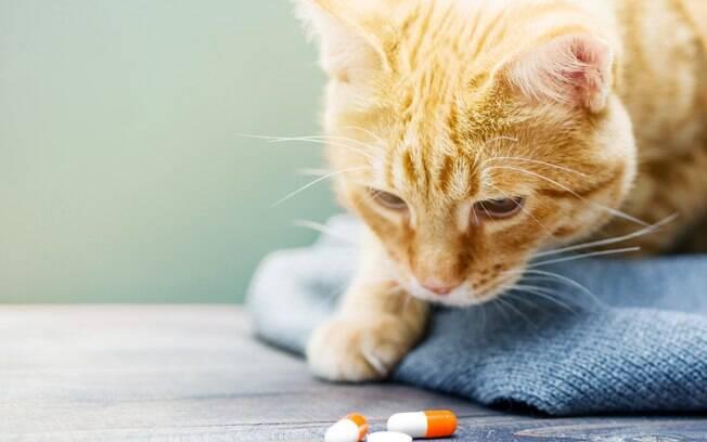 Remédios naturais podem ser dados aos pets?
