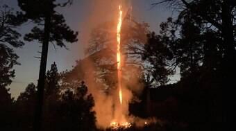 Árvore de 200 anos pega fogo e se parte ao meio após tempestade