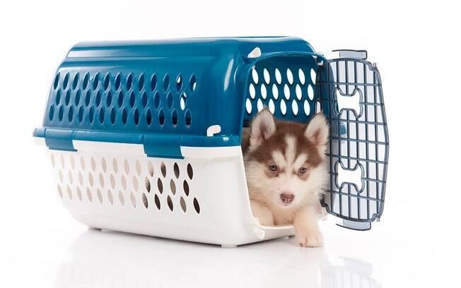 Preste muita atenção antes de comprar uma caixa de transporte para o seu pet.