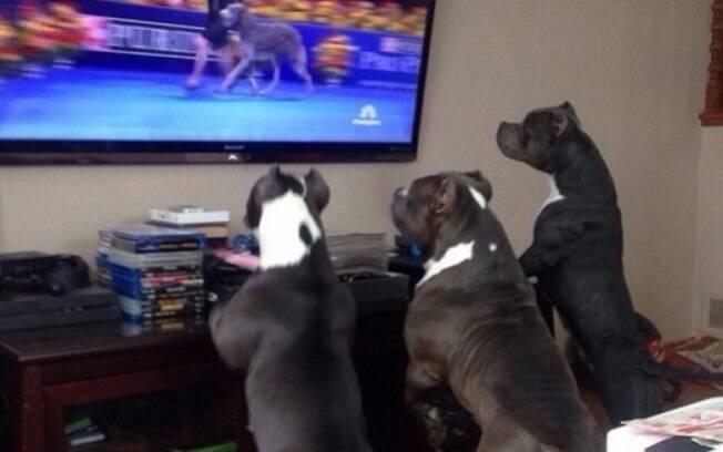 Uns cachorros admirando uma gatinha hehe