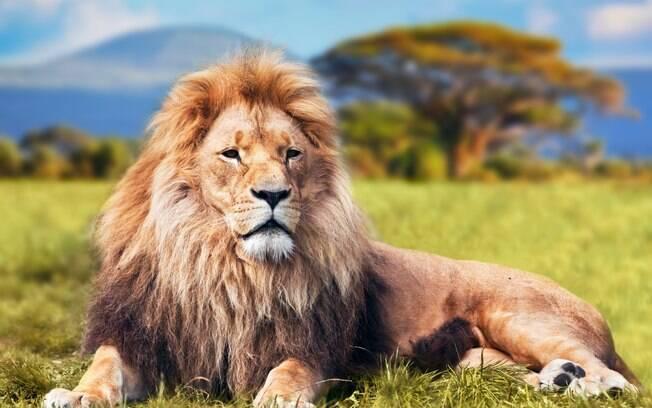 Em 2013, um casal foi atacado por um leão enquanto estava fazendo sexo no Zimbábue