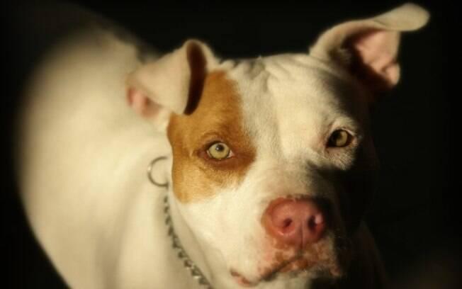Uma criança de 6 anos morreu após ser atacada por um pitbull em Uberlândia.