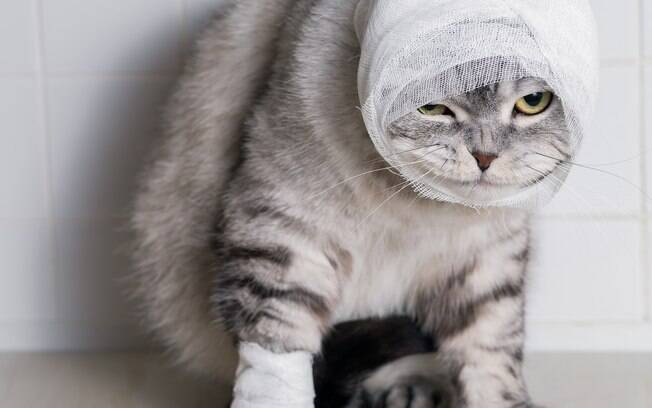 Os gatos são bem travessos, por isso normalmente acabam se ferindo