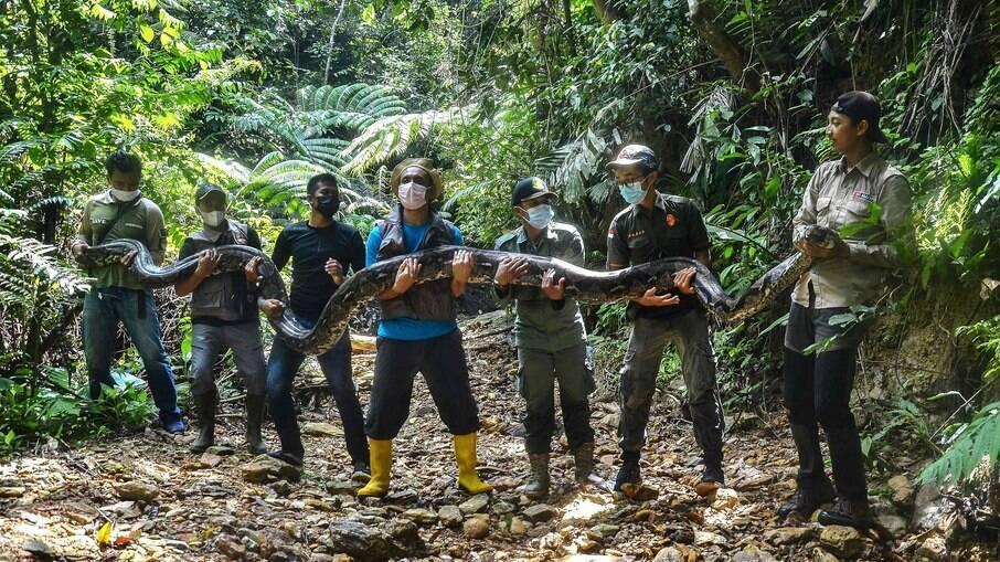 Cobra de 9 metros é resgatada na Indonésia