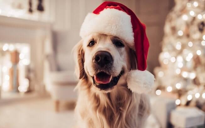 Para levar o cachorro para a ceia de Natal o dono precisa montar uma mala com alguns itens importantes