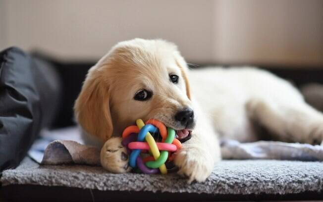 Os brinquedos para cachorro podem ser utilizados para divertir e diminuir o estresse dos bichinhos
