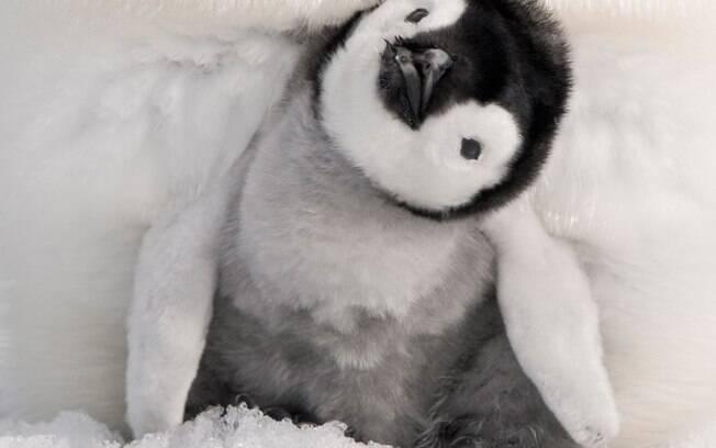 Pinguins são pegos tentando roubar sushi em restaurante na Nova Zelândia; veja