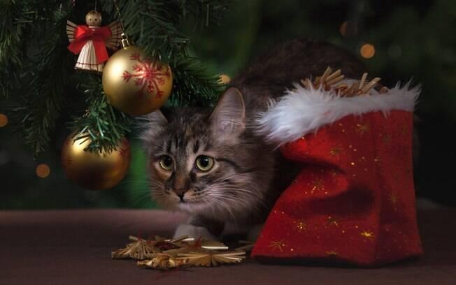 E se o Natal fosse uma festa de gatos?