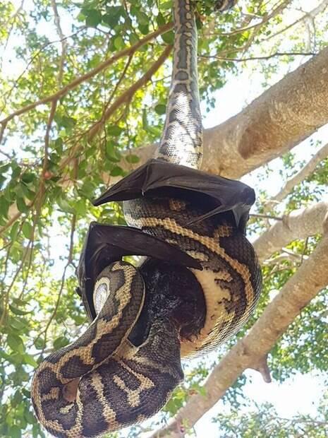 Uma cobra estava determinada a garantir o seu almoço, porém, parece que nem tudo saiu como o planejado
