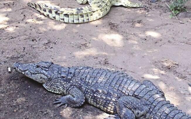 Collin Miller foi retirado da lagoa por socorristas do hotel na África do Sul enquanto crocodilos lutavam pelo seu braço
