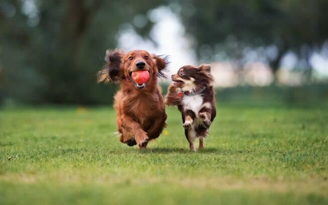 Listamos oito coisas que vão animar o dia do seu cachorro. Clique na imagem e visite a Pet Shop online