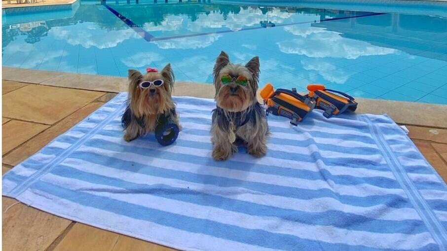 Armandinho e Nina são as grandes estrelas e mostram que um cãozinho pode e deve ser muito bem tratado nas viagens em família