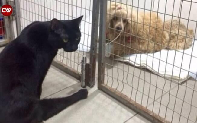 Gato com paralisia confortando animais doentes em abrigo