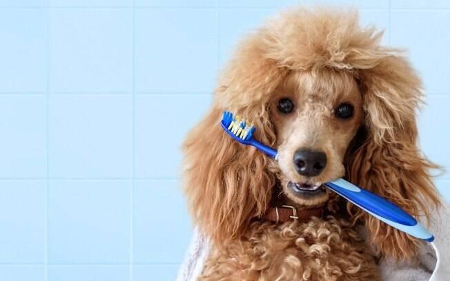 Escovar os dentes do cachorro é uma rotina muito importante para a saúde dele
