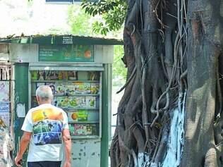 Região Leste.  Problema ocorre em árvore da avenida Francisco Sales, no bairro Santa Efigênia