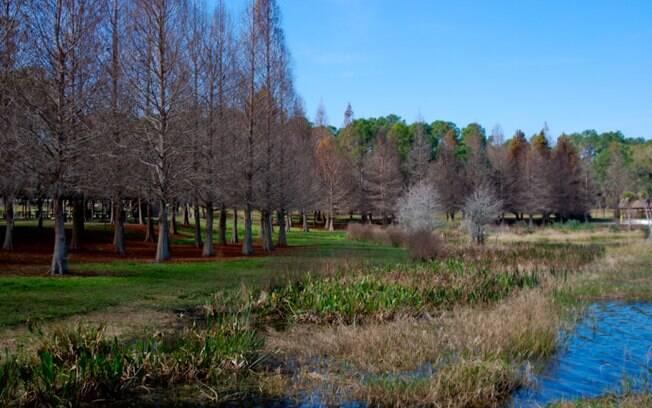 Além dos parques de diversão, Orlando também tem lindos parques com áreas verdes
