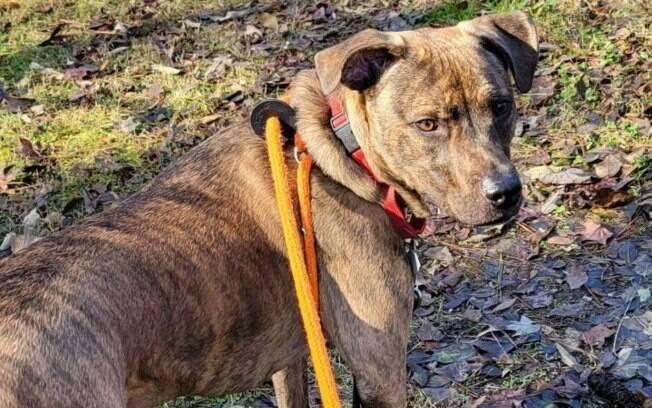 Depois de ter sido abandonado pelos antigos donos, cachorro encontra um lar definitivo
